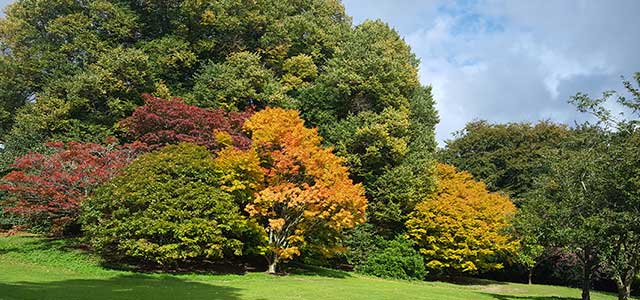 Autumn Batsford Arboretum Colours